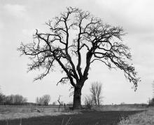black and white image of tree in winter with no leaves